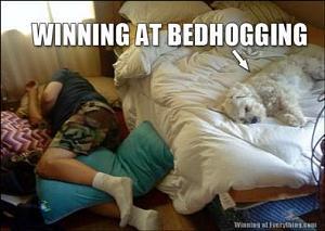 Click image for larger version  Name:bed-hogging-dog.jpg Views:84 Size:21.7 KB ID:3370